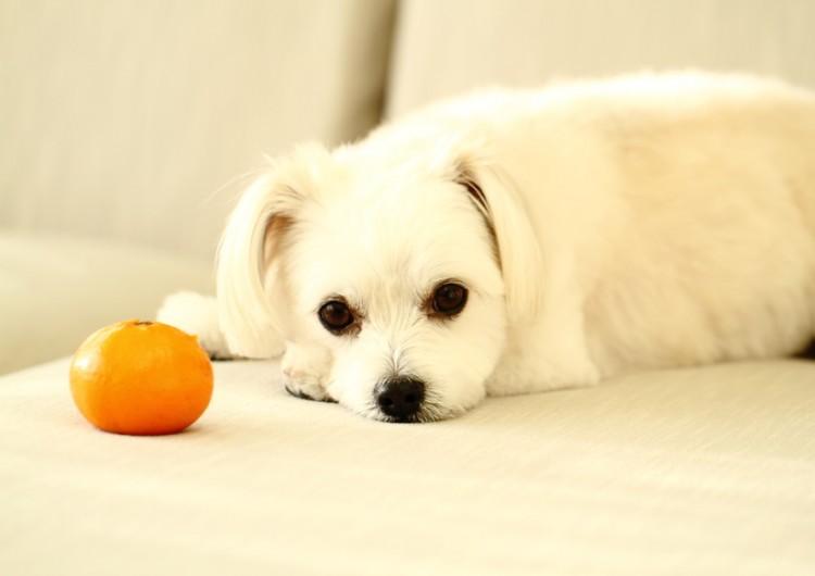 犬 に あげ て いい 果物