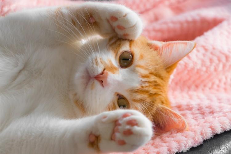 ぶるぶる 猫 しっぽ