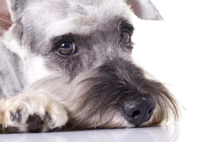 愛犬ハウスセキノ 訓練 訓練犬 -