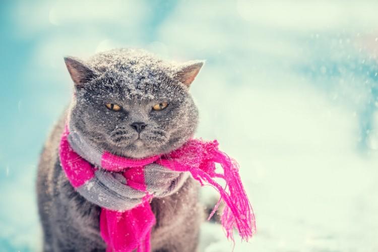 猫の寒さ対策とは?愛猫が冬を乗り切るためのポイントと注意点を解説 ...