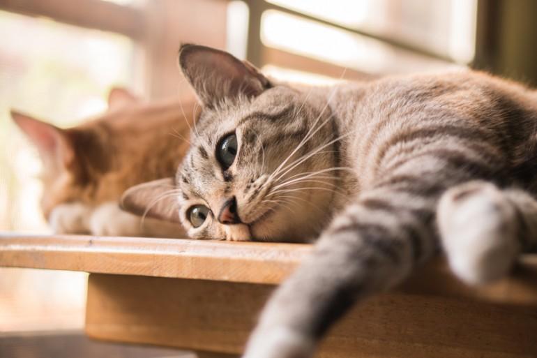 先住 猫 ストレス