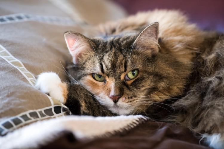 猫ストレスサインは ストレスが溜まったときの行動解消法について