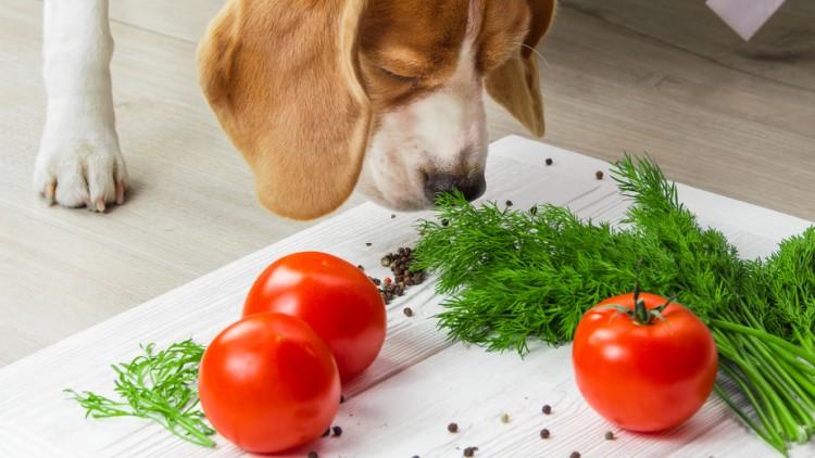 野菜 犬 が 食べ られる