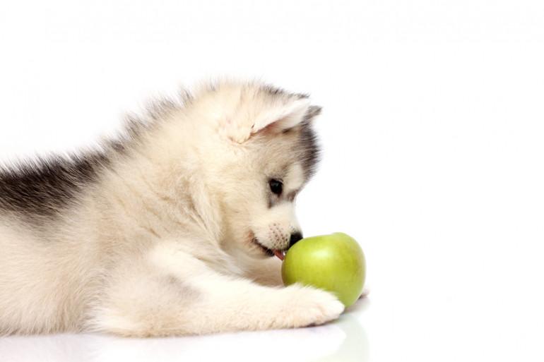 あげ 犬 果物 いい に て
