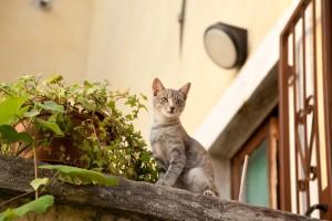 猫 外 に 出さ ない