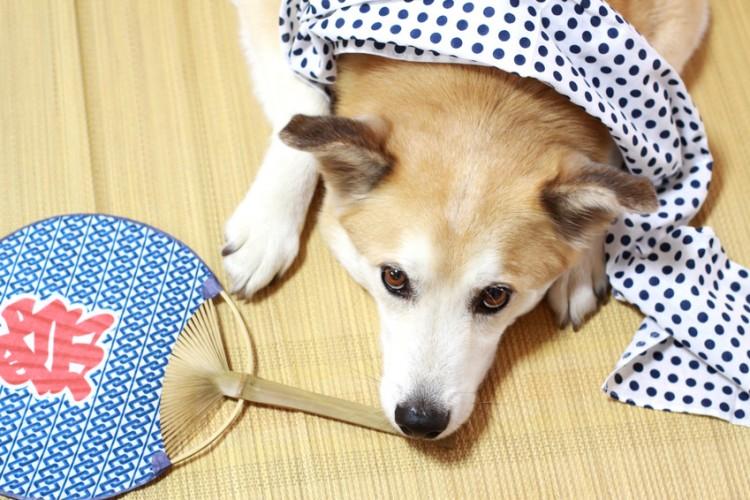 犬の飼い主さんに聞きました 夏場はどんな暑さ対策をしていますか