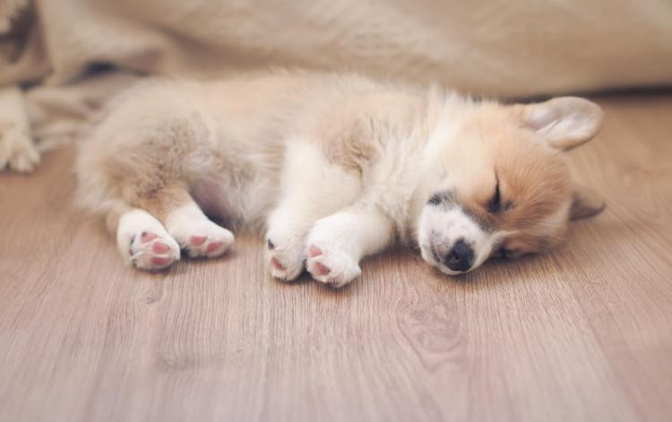 痙攣 時に 犬 てる 寝