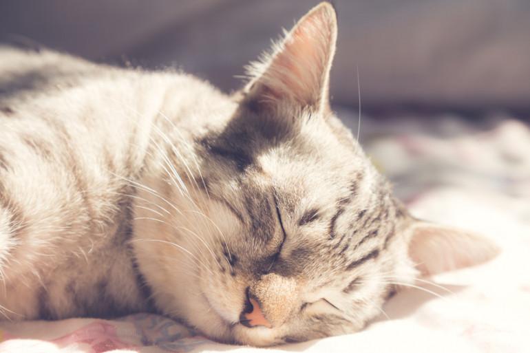 寝る 猫 仰向け で