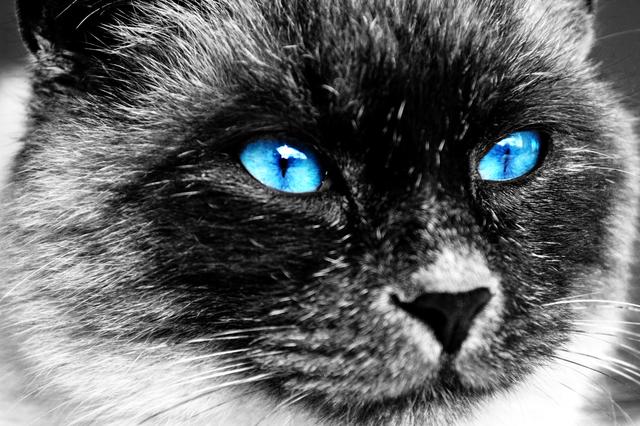 猫 の 目 が 光る 理由