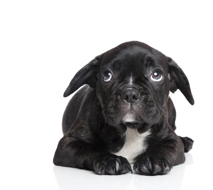 反応 音 する が 犬