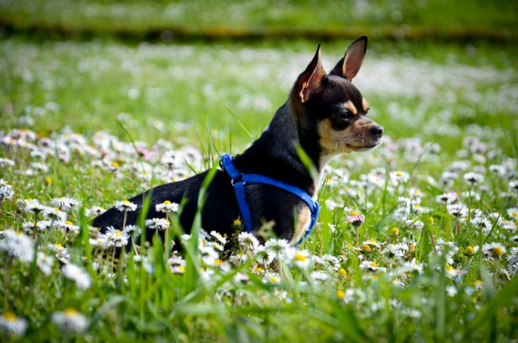 小型 犬 散歩