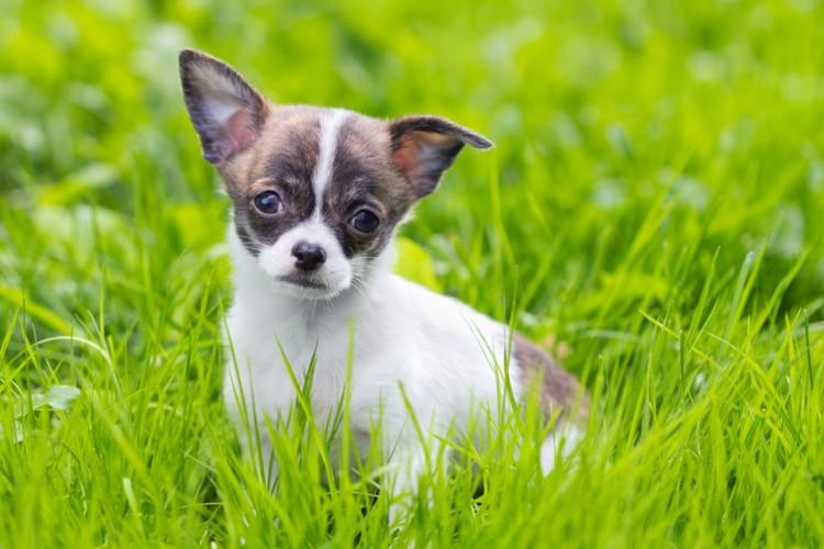 吠える しつけ 犬 犬が人に吠える、原因と止める方法