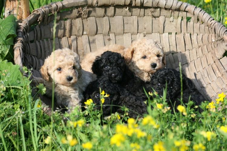 犬 安い ブリーダー 犬の値段はどう決まる?高い・安い理由や犬種別の相場をブリーダーが解説