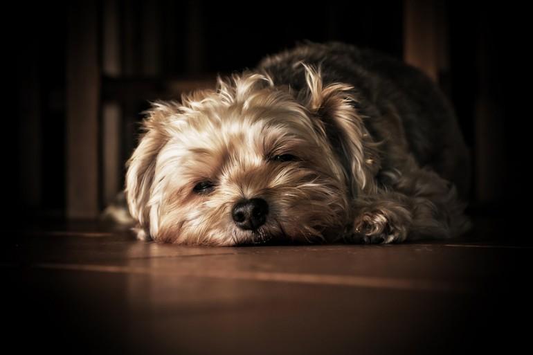 犬 が しっぽ を 振る 理由