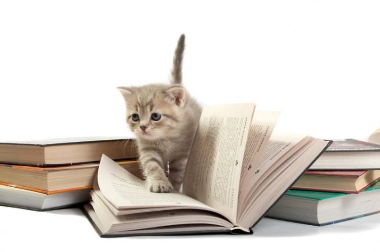 人気の猫ランキングTOP10! それぞれの特徴・性格をご紹介