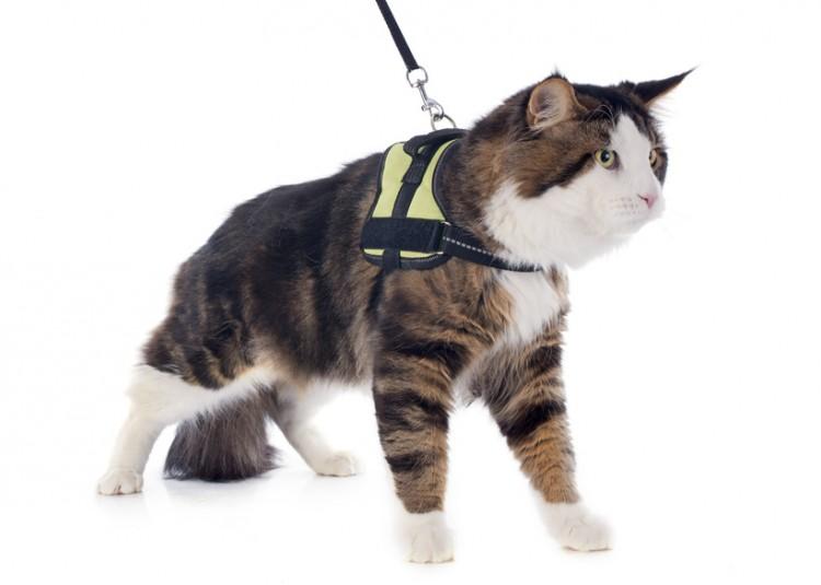猫 リード 散歩 病気