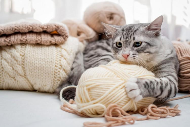 猫と上手に暮らすために。猫のしつけは「猫づきあい」を知ることから。|みんなのペットライフ