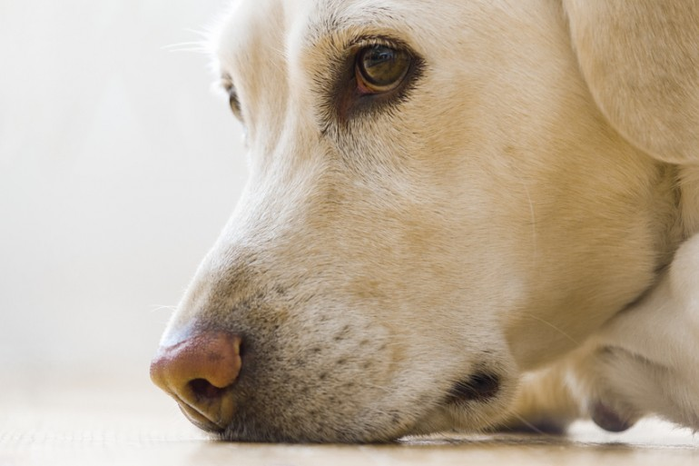 犬 に 噛ま れ たら 何 科 犬に噛まれたときの対処は?何科にいけばいいの?