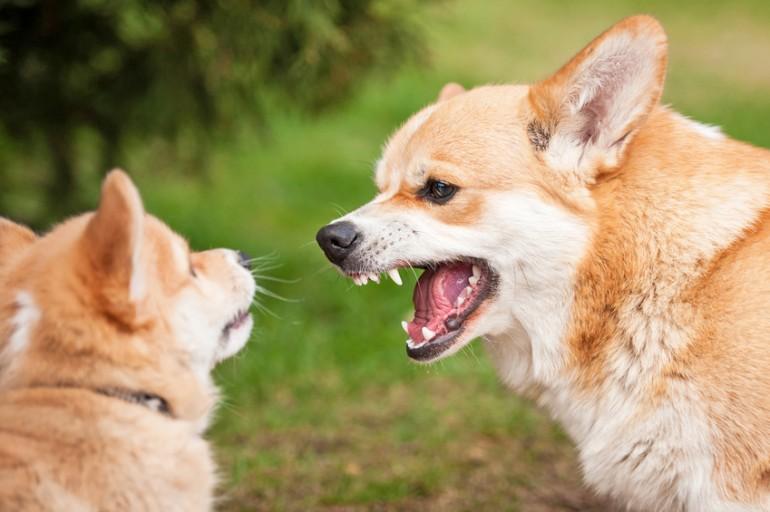 犬 に 噛ま れ たら