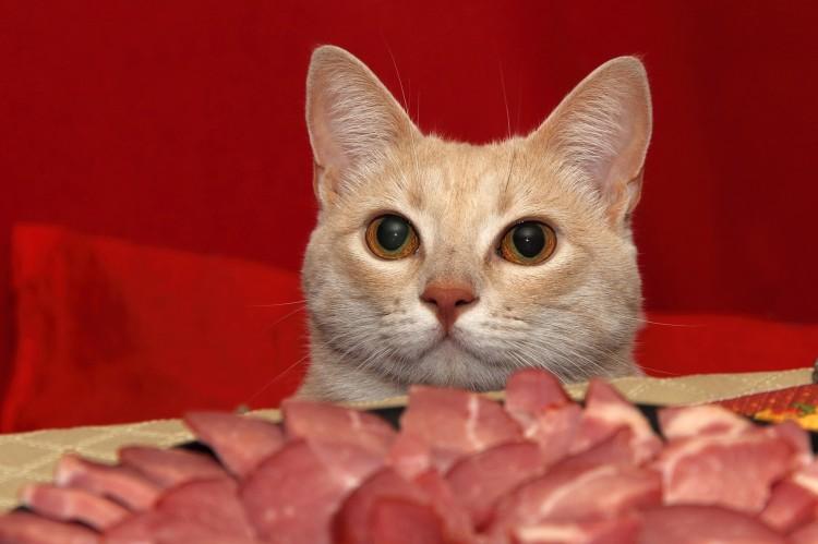 おもしろ猫学】猫は完全肉食動物...