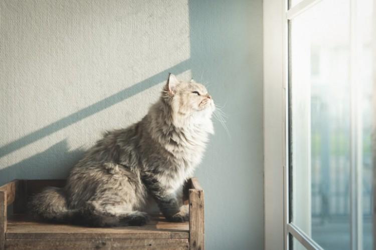 猫 本棚 対策
