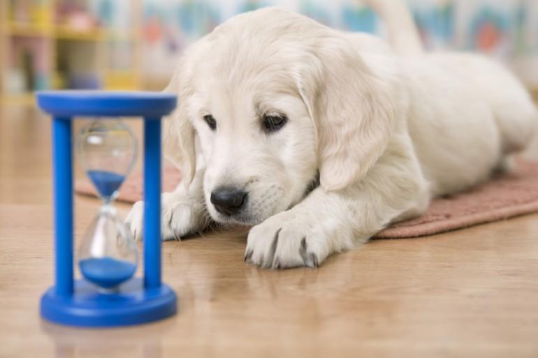 避妊 犬 手術 メス