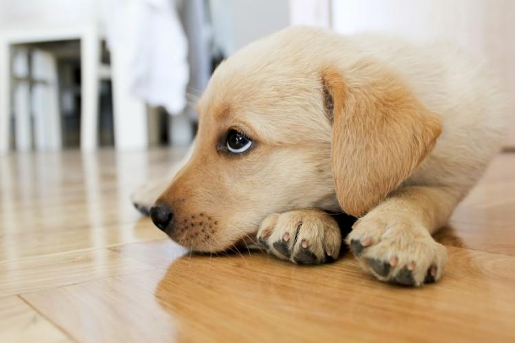 獣医師執筆 子犬が吐く原因は 吐いたときの対処法や予防法について