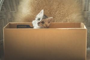 野良猫 保護 したら
