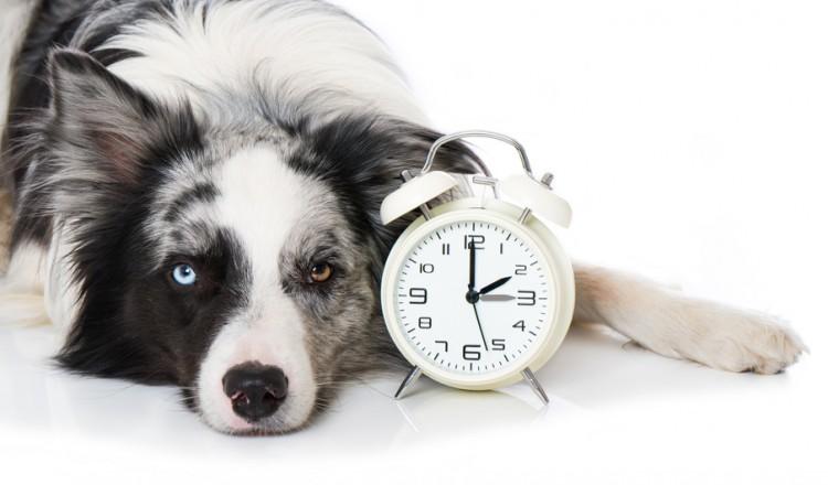 犬の年齢を人間に換算するとどれくらい 犬年齢の計算式 平均寿命