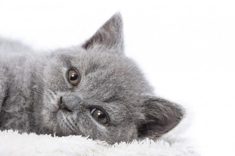 猫が水を飲まないのは病気?猫に水を飲ませるため …