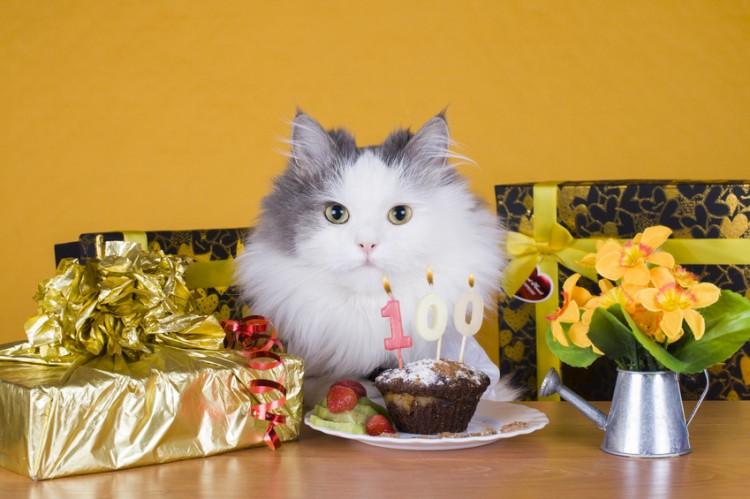 年齢 人間 猫