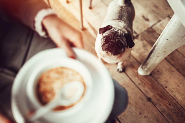 カフェ ドッグ